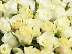 Bunch Of Cream Roses Stock Photos