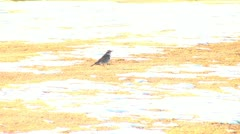 A little bird eat the worm Stock Footage