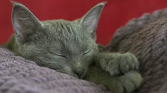 Kitten sleeping on sleeping person Stock Footage