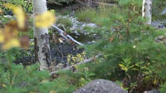 Tranquil Flowing Creek - stock footage