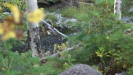 Tranquil Flowing Creek Stock Footage