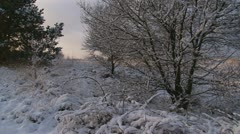Dutch Veluwe landscape, snow covered + pan Stock Footage