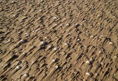 pebbles on a wind blown beach - stock photo