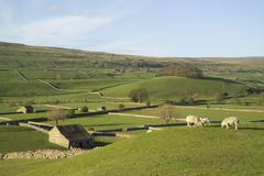 Stock Photo of wensleydale, north yorkshire, england