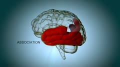 Brain structures and their functions - stock footage