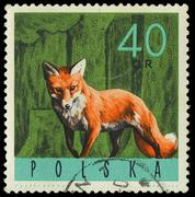 poland - circa 1965: a stamp printed in the poland shows red fox, vulpes vulp - stock photo