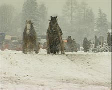 Horse sled race in the snow Stock Footage