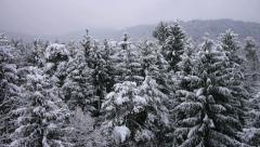 AERIAL: Flight over a snowy forest Stock Footage