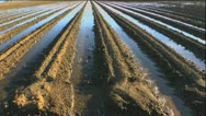 Farm Irrigation Rows Stock Footage