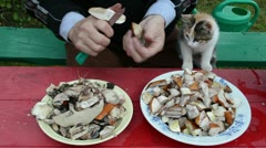 Man cut orange cap mushrooms cat sit knees Stock Footage