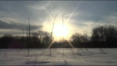 Winter landscape in the field with a plant Stock Footage