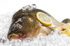 Fresh carp with lemon on ice Stock Photos