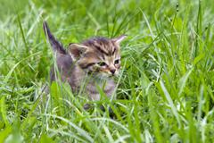 Small kitten in the grass Stock Photos