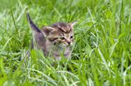 Stock Photo of small kitten in the grass