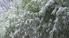 SLOW MOTION: Snow falling off tree branches Stock Footage