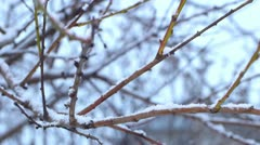 Tree branch in a snowy day Stock Footage