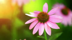 Wild Flowers In The Meadow. - stock footage