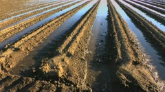 Irrigated Farm Field - stock footage