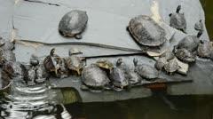 Turtles Stock Footage