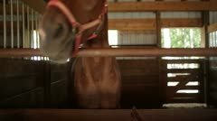 Playful Horse Swaying Head in Stall Stock Footage