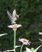 Stock Photo of butterfly on the flower