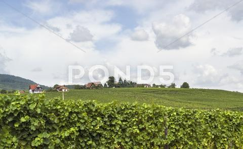 Stock photo of mittelbergheim in alsace