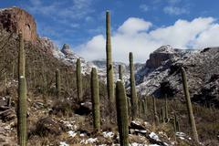 Arizona Winter Scenic Kuvituskuvat