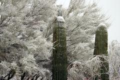 Rare Arizona Desert Snowfall Stock Photos