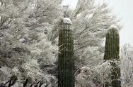 Stock Photo of Rare Arizona Desert Snowfall