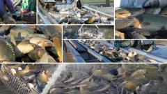 Fishing Industry, collage Stock Footage