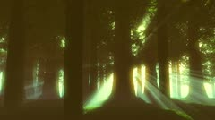 Supernatural Forest Lightrays Stock Footage