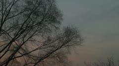 Tree,sunset,scenery Stock Footage