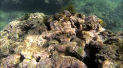 Reef in Puerto Viejo Costa Rica Stock Footage
