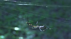 Spider walking walking away from hand in slow motion Stock Footage