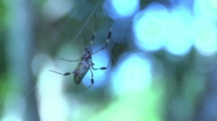 Spider moving in web in slow motion Stock Footage