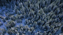 AERIAL: Winter forest Stock Footage