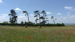 Hay bales at mowed field and blooming field on clifftop at French coast - stock footage