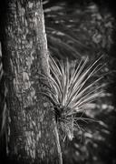 Airplant on palm Stock Photos
