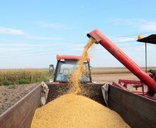 soybean harvesting - stock photo