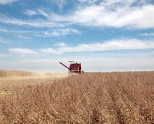 Soybean harvesting Stock Photos