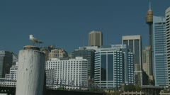 Sydney Darling Harbour cityscape (3) Stock Footage