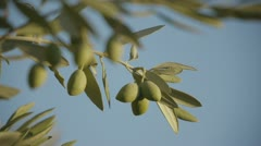 olives in andalucia 7 - stock footage