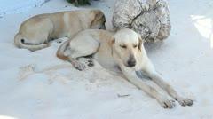 Beach dogs. - stock footage