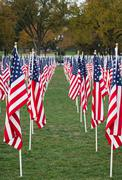 Us flags in a park Stock Photos