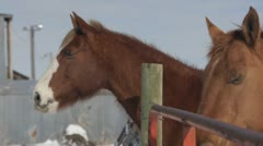 Horse at the farm Stock Footage