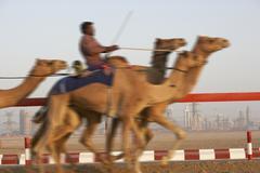 Camel Racing Dubaissa Kuvituskuvat