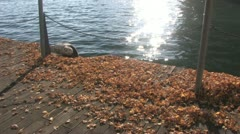 Autumn leaves at the harborfront Stock Footage