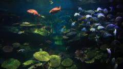 Fishes float in an aquarium. Stock Footage