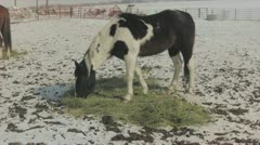 Horse eating hay Stock Footage