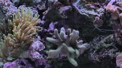 Soft Coral Time Lapse Video Stock Footage